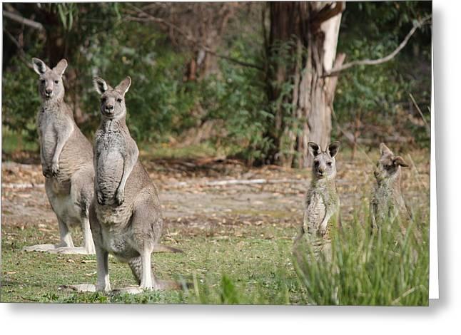 Eastern Grey Kangaroo Family Greeting Card by Roo Printz