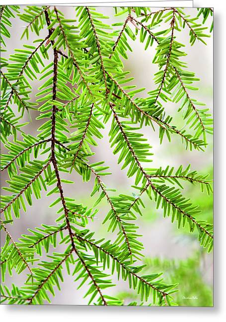 Greeting Card featuring the photograph Eastern Hemlock Tree Abstract by Christina Rollo