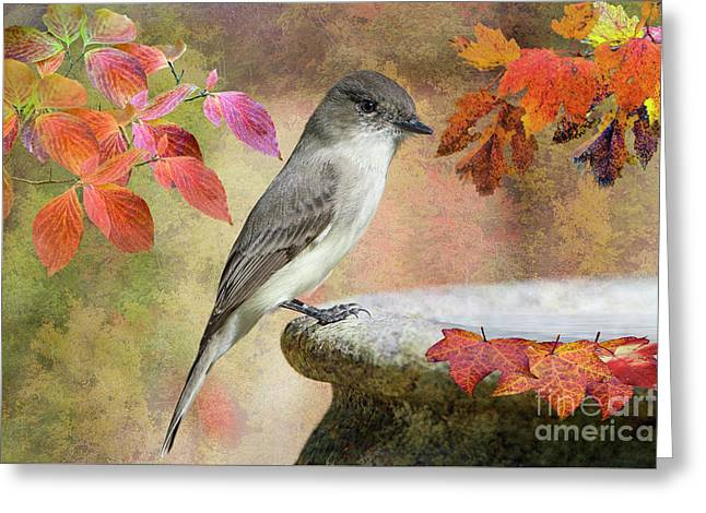 Eastern Phoebe In Autumn Greeting Card