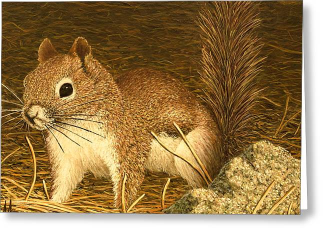 Eastern Pine Squirrel Greeting Card