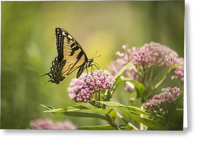 Eastern Tiger Swallowtail 1-2015 Greeting Card by Thomas Young