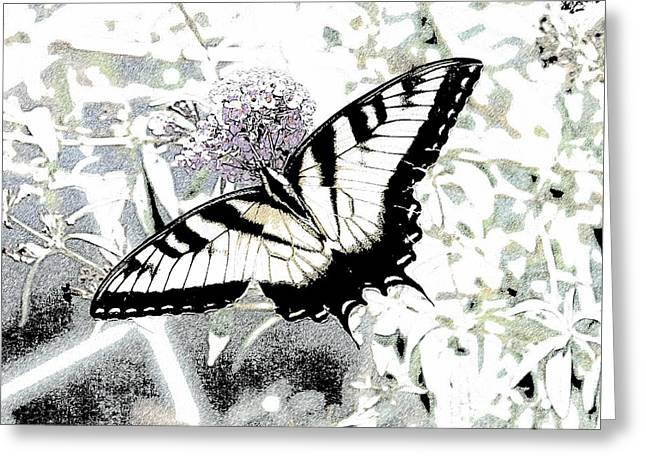 Eastern Tiger Swallowtail Butterfly - Bleached Abstract  Greeting Card by Scott D Van Osdol