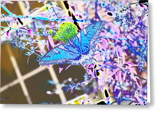 Eastern Tiger Swallowtail Butterfly - Blue Abstract Greeting Card by Scott D Van Osdol