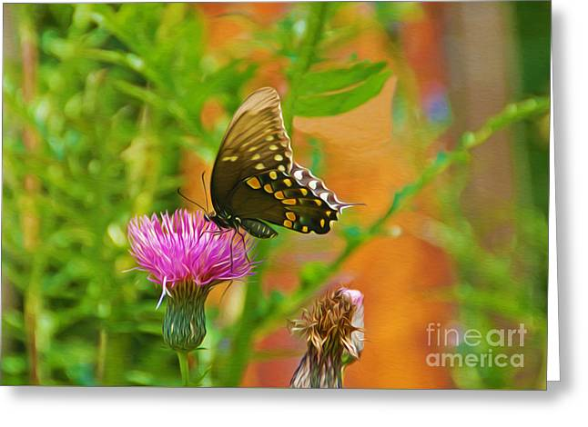 Eastern Tiger Swallowtail Butterfly On Thistle Greeting Card