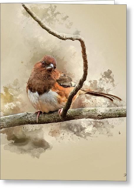 Bird Art - Eastern Towhee - Female Greeting Card by Ron Grafe