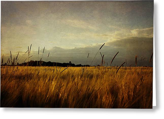 Greeting Card featuring the photograph Eastern Wheat by Gary Smith