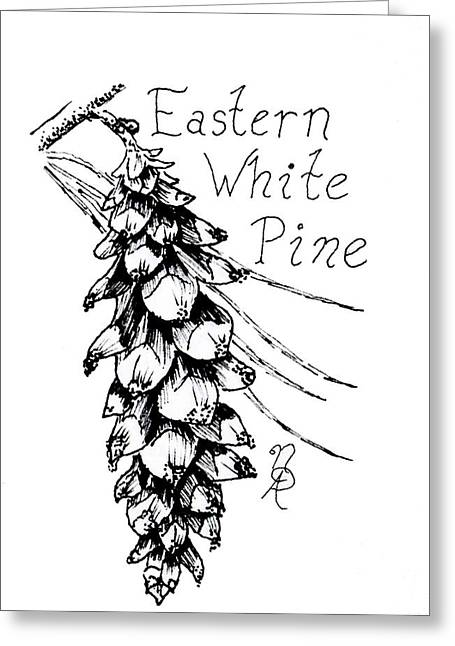 Eastern White Pine Cone On A Branch Greeting Card