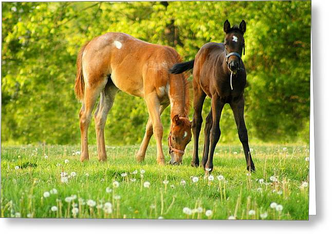 Easy Pickins Greeting Card