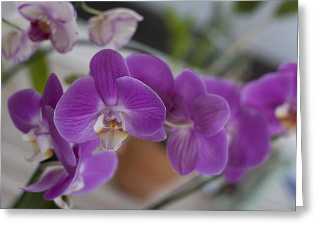 Eat More Orchids Greeting Card by Kevin  Sherf