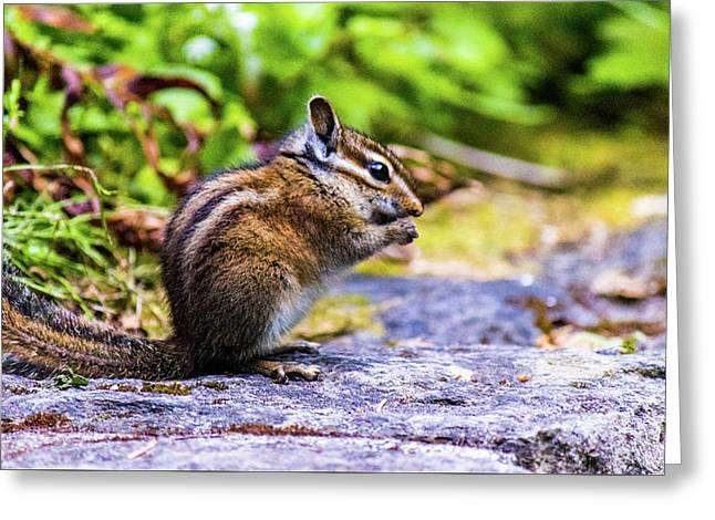 Greeting Card featuring the photograph Eating Chipmunk by Jonny D
