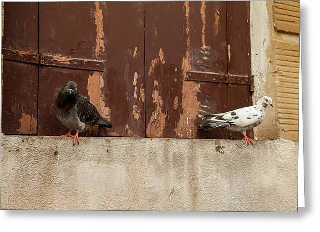 Ebony And Ivory Greeting Card by Art Ferrier