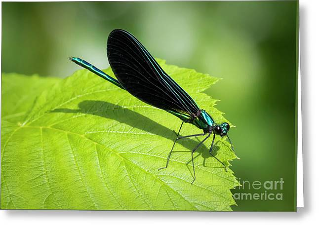 Greeting Card featuring the photograph Ebony Jewelwing by Ricky L Jones