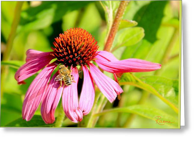 Echinacea Bee Greeting Card