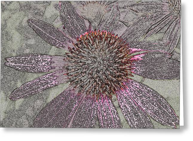 Echinacea Fantasia Greeting Card by William Tasker
