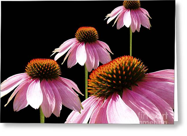 Echinacea In Half  Greeting Card by Cathy  Beharriell