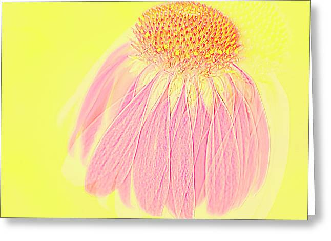 Greeting Card featuring the photograph Echinacea In Pink by Linde Townsend