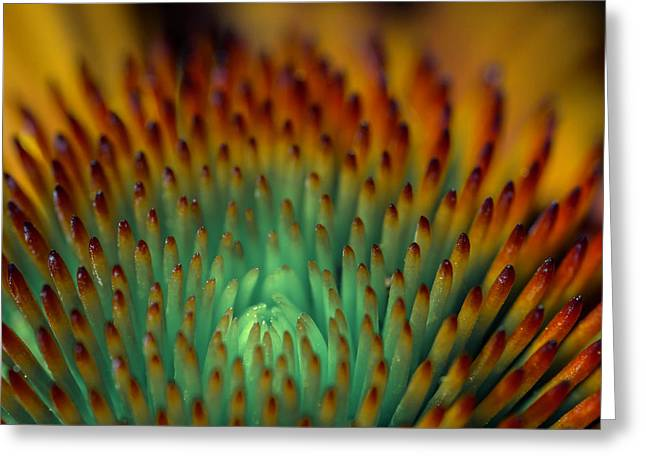 Echinacea Macro Greeting Card