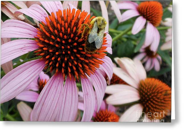 Echinacea Tea Time For Bee Greeting Card