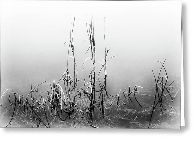 Echoes Of Reeds 1 Greeting Card