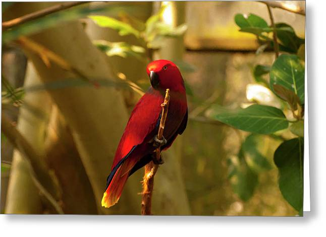 Eclectus Parrot Digital Oil Painting Greeting Card by Chris Flees