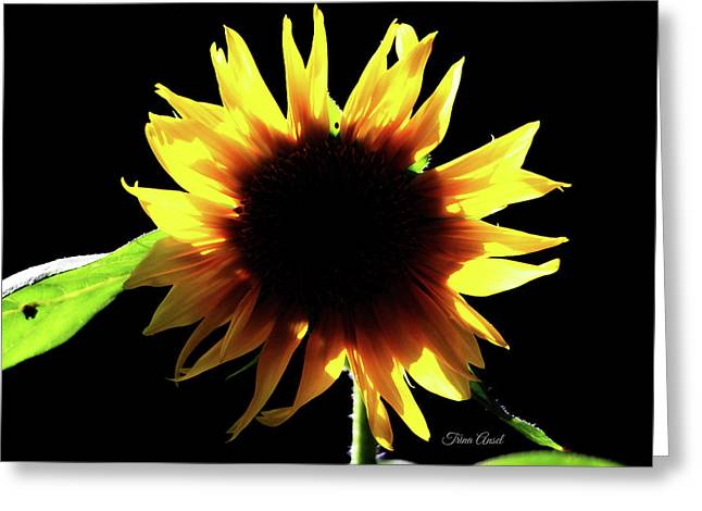 Greeting Card featuring the digital art Eclipse Of The Sunflower by Trina Ansel