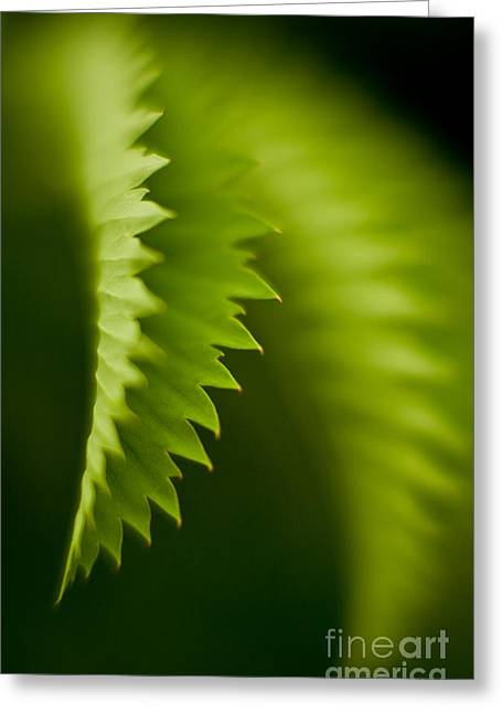 Edges Greeting Card by Mike Reid