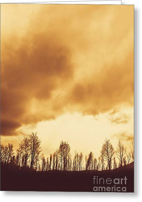 Eerie Fields In Silhouette Greeting Card by Jorgo Photography - Wall Art Gallery