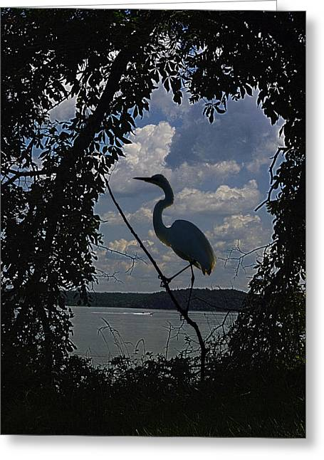 Egret Against Clowds Greeting Card by Ron Kruger
