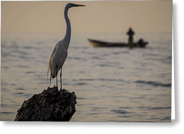 Egret And Boat Greeting Card by Dane Strom
