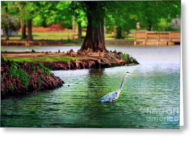 Heron At Honor Heights Greeting Card by Tamyra Ayles