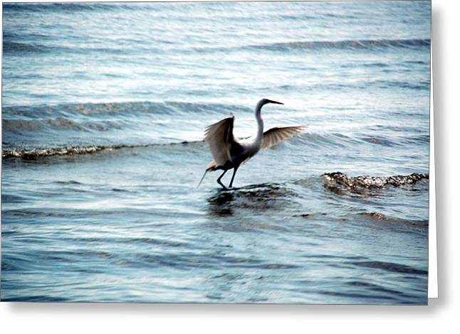Greeting Card featuring the photograph Egret At Sunset by Kathleen Stephens