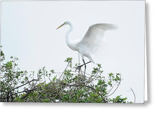 Egret Balance Greeting Card by Keith Lovejoy