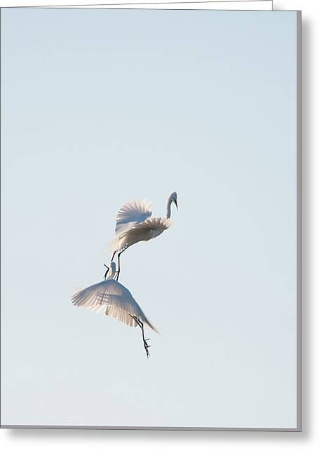 Egret Dance 2 Greeting Card by Catherine Lau