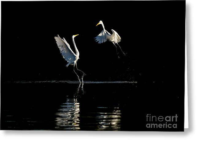 Egret Dance II Greeting Card by Emily Bristor