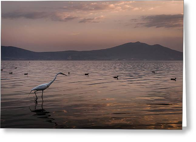 Egret Fishing In Lake At Sunset Greeting Card by Dane Strom