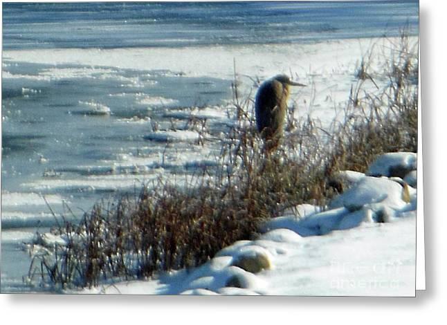 Egret Frozen Lake Greeting Card
