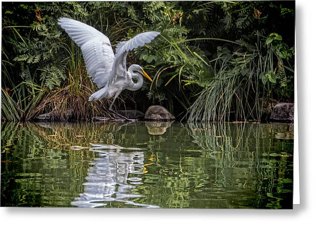 Egret Hunting For Lunch Greeting Card