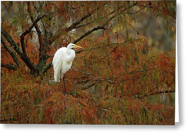Egret In Autumn Greeting Card