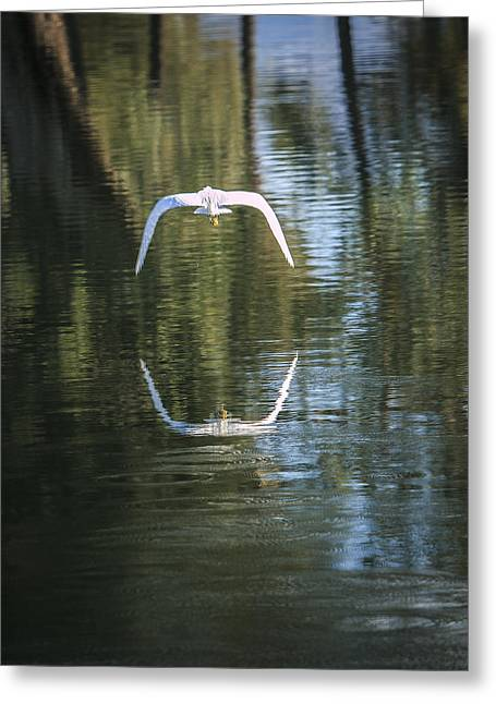 Egret In Flight Greeting Card