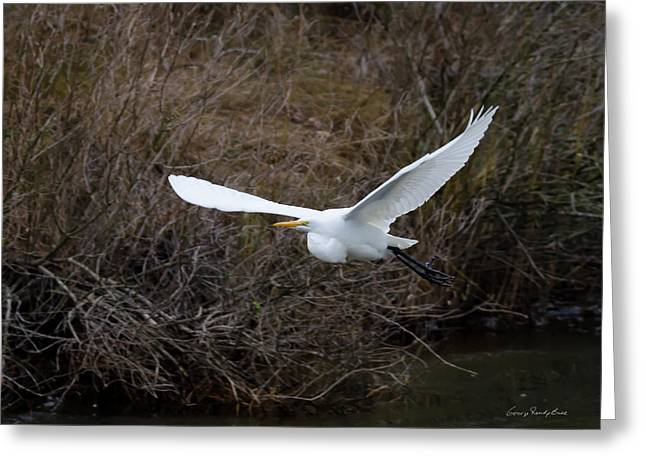 Greeting Card featuring the photograph Egret In Flight by George Randy Bass