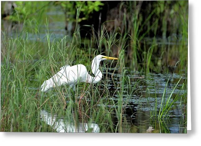 Egret In Grasses Greeting Card by Tamra Lockard