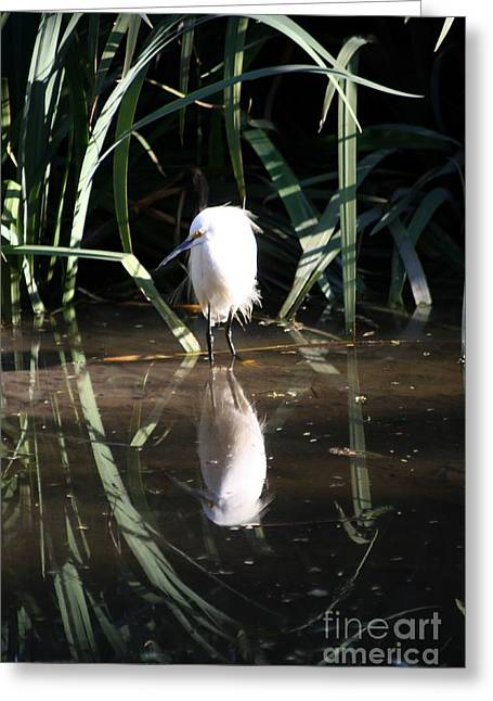 Egret In Reed Greeting Card
