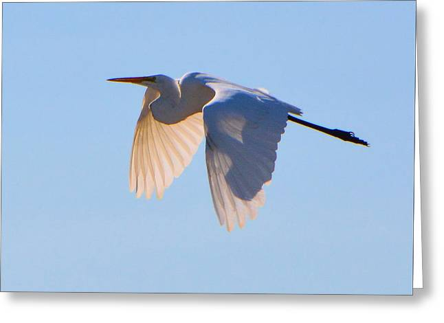 Egret In Silhouette Greeting Card by Josephine Buschman