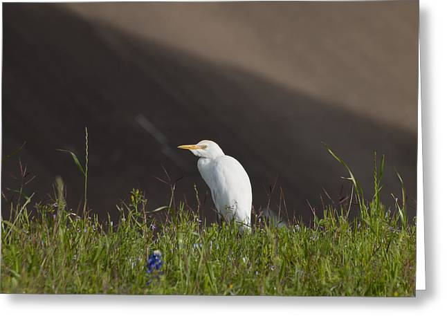 Greeting Card featuring the photograph Egret In The City by Joshua House