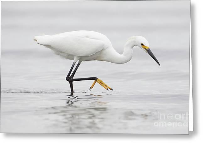 Egret In The Ocean Greeting Card