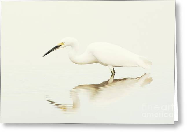 Egret In Vanilla Tones Greeting Card by Ruth Jolly