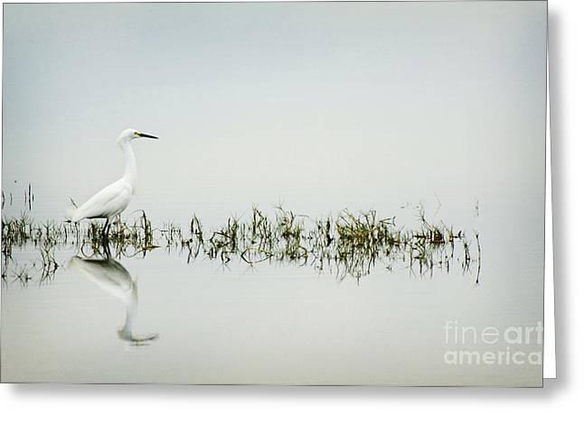 Egret Greeting Card by Jim  Calarese