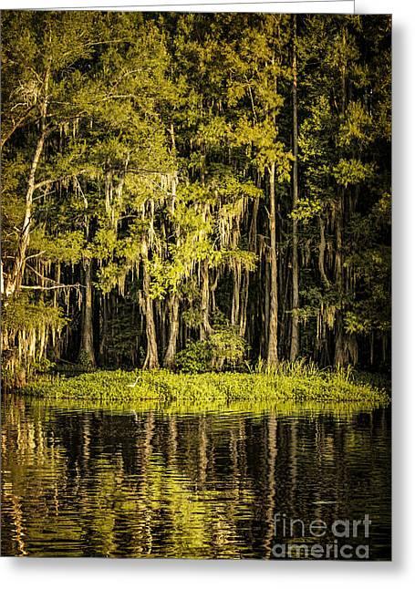Egret On Caddo Lake II Greeting Card by Tamyra Ayles