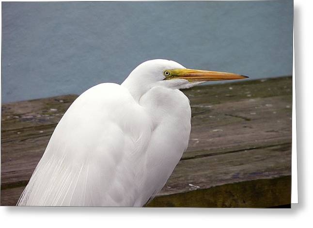 Egret On The Dock Greeting Card by Al Powell Photography USA