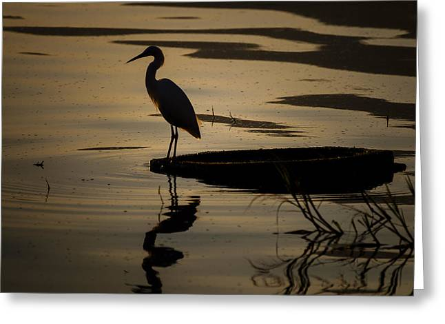 Egret On The Lake Greeting Card by Dane Strom